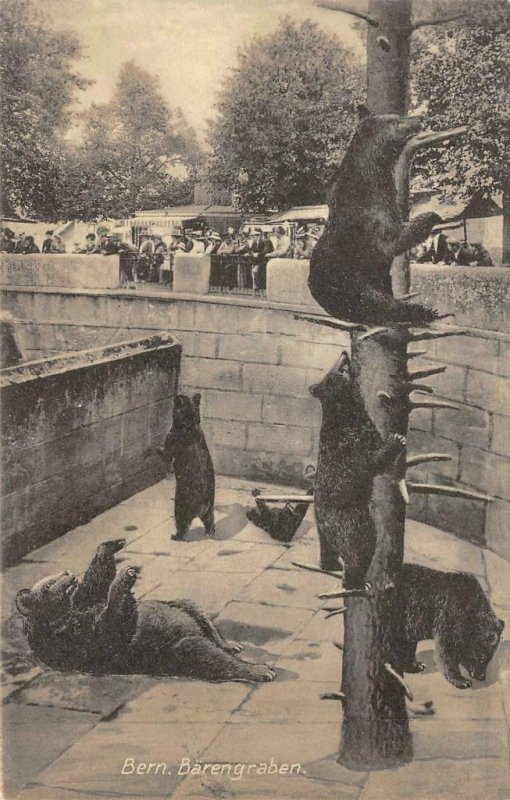 Bern, Switzerland Bear Pit c1910s Vintage Postcard