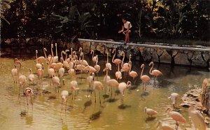 Ardastra Gardens Nassau in the Bahamas Unused