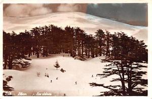Cedars, Lebanon Postcard, Carte Postale Liban Cedars Liban