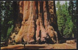 Us California Tree  Sierra Nevada Mountains of California.