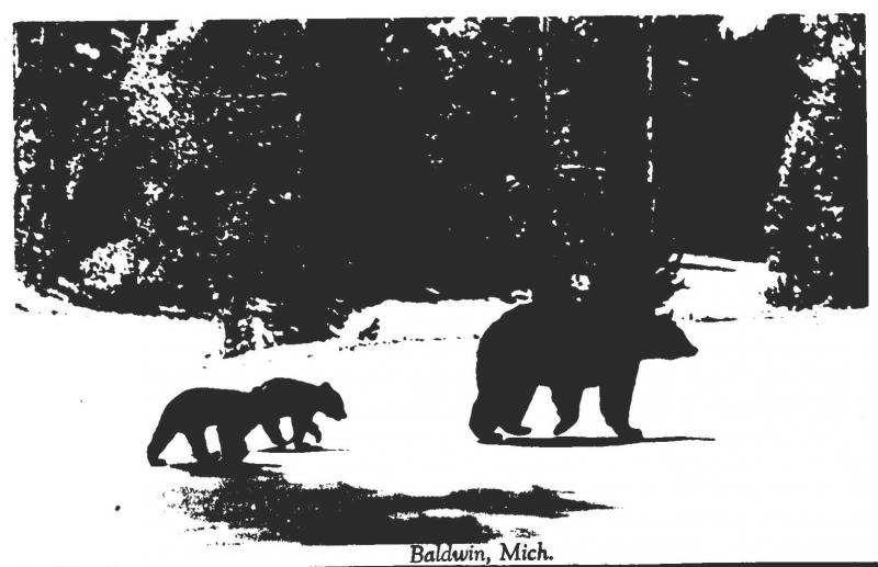 Michigan Baldwin Mother Bear and Cubs Real Photo