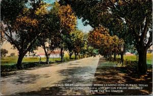 El Paso Texas~Country Road Into Town~Farm House~Alfalfa & Cotton Fields~1910 PC
