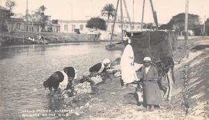 Egypt Native Women Cleaning washing radishes in the Nile, donkey