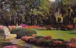 North Carolina Wilmington Airlie Gardens