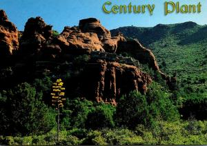 Arizona Century Plant and Red Rocks Of Milton Ridge Near Sedona