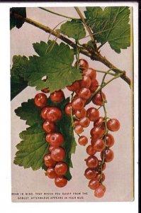 Greetings, Berries, Used Split Ring Cancel Nova Scotia, Vintage Postcard