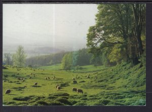 Cotswold Sheep Pastures,England,UK BIN