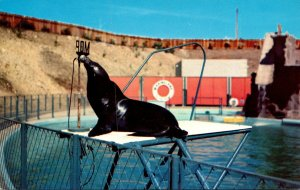 California Marineland Of The Pacific Sea Lion Si The Politician