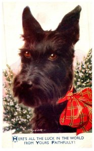 Dog  , with plaid bow,