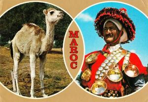 Maroc Moroccon Fashion Folklore Animal Costume Fashion Postcard