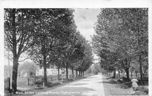 Tannersville Pennsylvania~Gal Walks Along Tree-Lined Main St~c1910 Postcard B&W