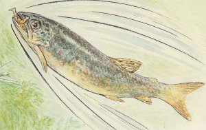 The Tale Of Jeremy Fisher Beatrix Potter Trout 1906 Book Postcard
