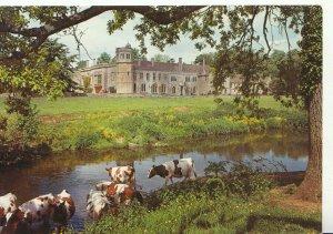 Wiltshire Postcard - Lacock Abbey - Showing Cows - Ref 21014A