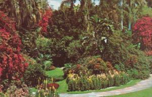 Florida St Petersburg Sunken Gardens Tropical Garden Scene