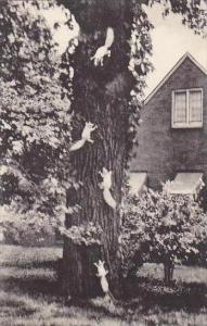 Illinois Olney The Home Of the White Squirrel Albertype