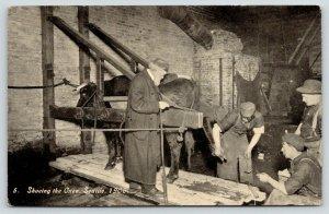 Seattle Washington~Ezra Meeker Oregon Trail~Blacksmith Shop~Shoe the Oxen~1906
