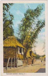 Feathery Bamboo, MANILA, Philippines, 1910-1920s