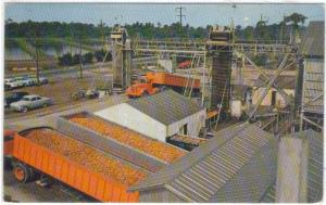 California - Orange  Processing Plant - Truck Loads -C - '50