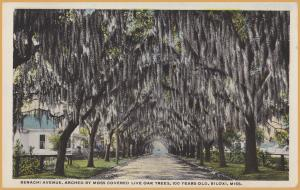 Biloxi, Miss., Benachi Ave. Arched by Moss covered Live Oak Trees - 1920