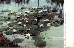 Maine Auburn Taylor Pond With Pond Lillies