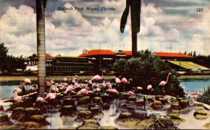Florida Miami Hialeah Park Flamingos
