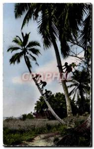 Modern Postcard Guinea Picking coconuts
