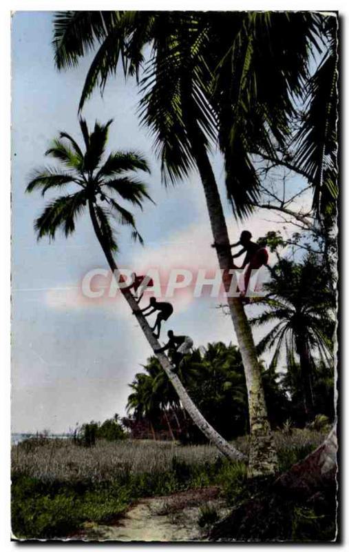 Modern Postcard Guinea Picking coconuts