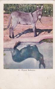 Donkey; Pleasant Reflection, 10s-20s