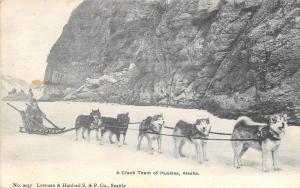 Alaska~Crack Team of Huskies~Dog Sled~Bundled Driver~1905 B&W Postcard