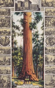 CALIFORNIA, 1930-1940's; Wawona Big Tree, Oldest Living Thing, Historical Eve...