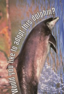 Adopt Kess The Beautiful Dolphin With A Bent Fin Postcard