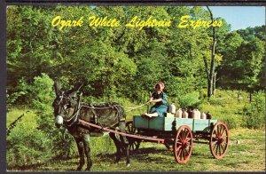 Ozark White Lightin Express Donkey Cart