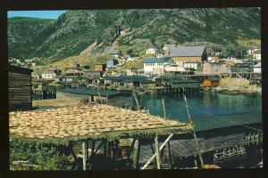 Petty Harbor, Newfoundland, Canada Postcard, Cod Fish Drying In Sun