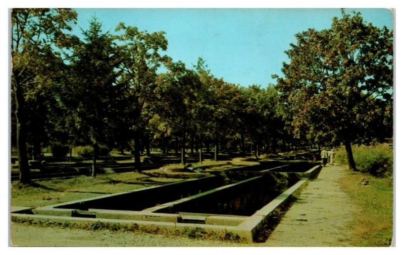 Rearing and Shipping Ponds, New Jersey State Fish Hatchery, NJ Postcard