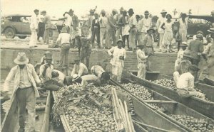 C1910 Farm Agriculture Occupation Workers Sorting fruit RPPC Photo Postcard 6060