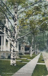 Birch Trees on Brighton Street, Rochester, New York - DB