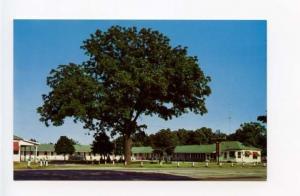 Niles MI Dixie Villa Motel US 31&33 Old Cars Autos Postcard