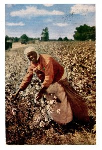 Carolina Cotton Picker