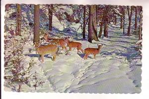 Four Deer on Snowy Woods, Maine, Photo Free Lance Photographers Guild