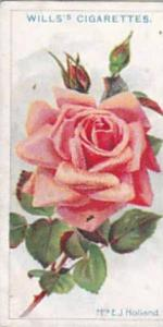 Wills Vintage Cigarette Card Roses A Series 1912 No 22 Mrs E J Holland