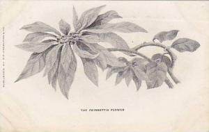 The Poinsettia Flower, 00-10s
