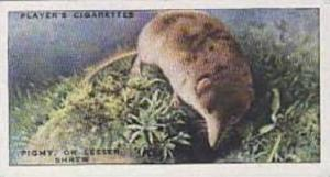 Player Vintage Cigarette Card Animals Of The Countryside No 3 Pigmy Or Lesser...