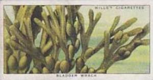 Wills Vintage Cigarette Card The Sea-Shore No 43 Bladder Wrack  1938