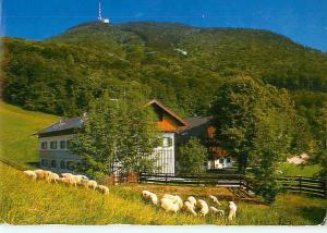 Die Gersberg Alm In Giter Gesellschaft Salzburg Sheep Cabin   Postcard  # 7241