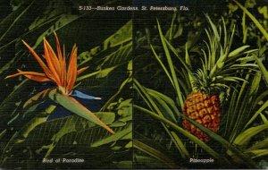 Florida St Petersburg Pineapple and Bird Of Paradise At Sunken Gardens Curteich