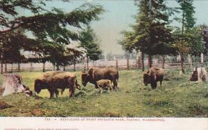 Bison, Buffaloes At Point Defiance Park, Tacoma, Washington, 1910-1920s