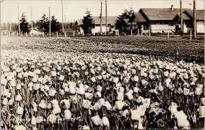 Bellingham WA Bulb Gardens Tulips Flowers Engle Real Photo Postcard G38