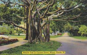 Florida Miami Banyan Tree In Coconut Tree