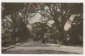 Elm Tree Hale Street Beverly Massachusetts 1910c postcard
