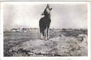 rppc - Nevada - CALL OF THE WILD - Howling Coyote - 1946
